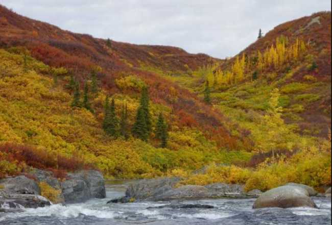 Colors of deciduous trees and bushes along the Delta River in Interior Alaska. Image-Ned Rozell