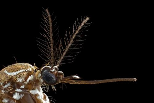 How Mosquitoes Smell Human Sweat(and new ways to stop them)