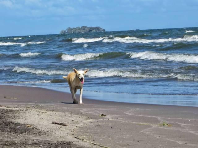 Perro de la Playa, Ometepe