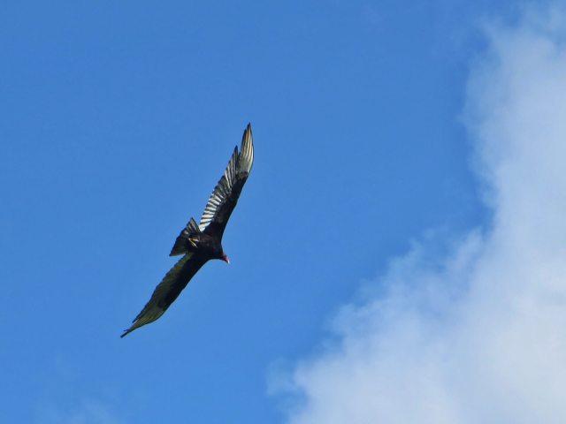 El Condor Pasa, Ometepe