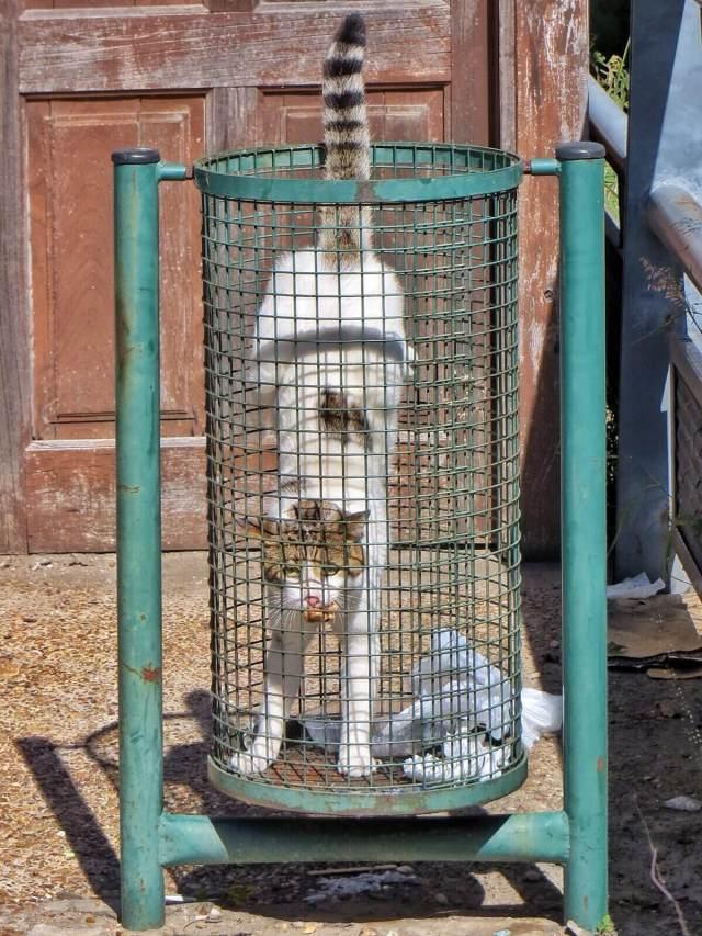 Padon vieressä kissa metsästi herkkupalaa roskiksesta.