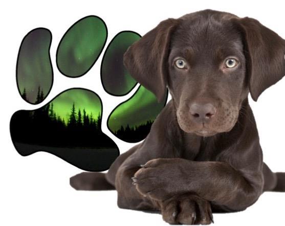 Alaska Dog Works