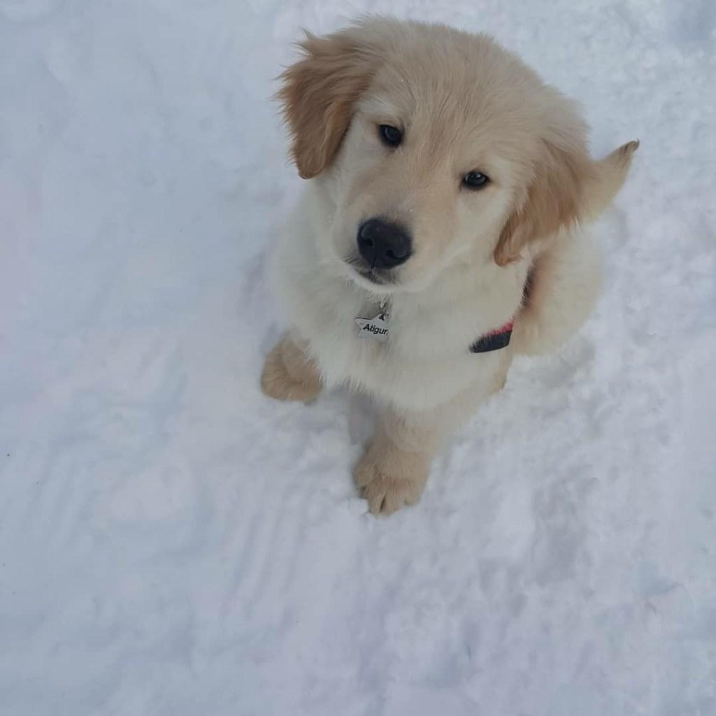 Alaska Puppy Training