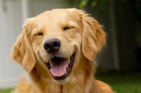 CBD Oil for Dogs: Guide for Dog Owners