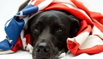 Memorial Day Tips for your Dog
