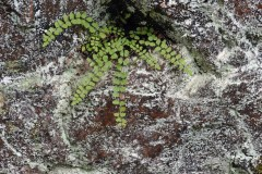 Rock and Fern