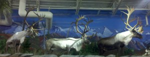 More Caribou