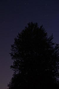 Night Photo of Tree at Bob Herman Wildlife Preserve