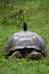Bird and a Tortoise