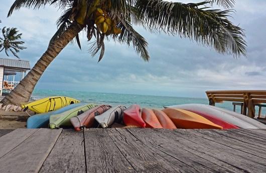 Palm and Kayaks