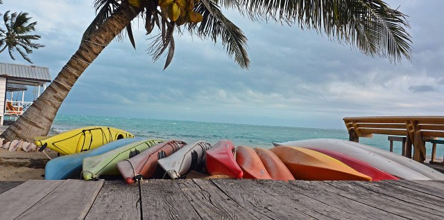 Palm and Kayaks