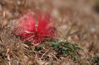Ground flower