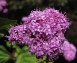 Trailside Flowers