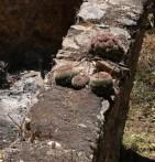 Wall Cactus