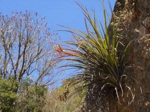 Wall Epiphytes
