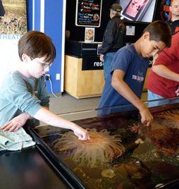 alaska sealife center touch tank