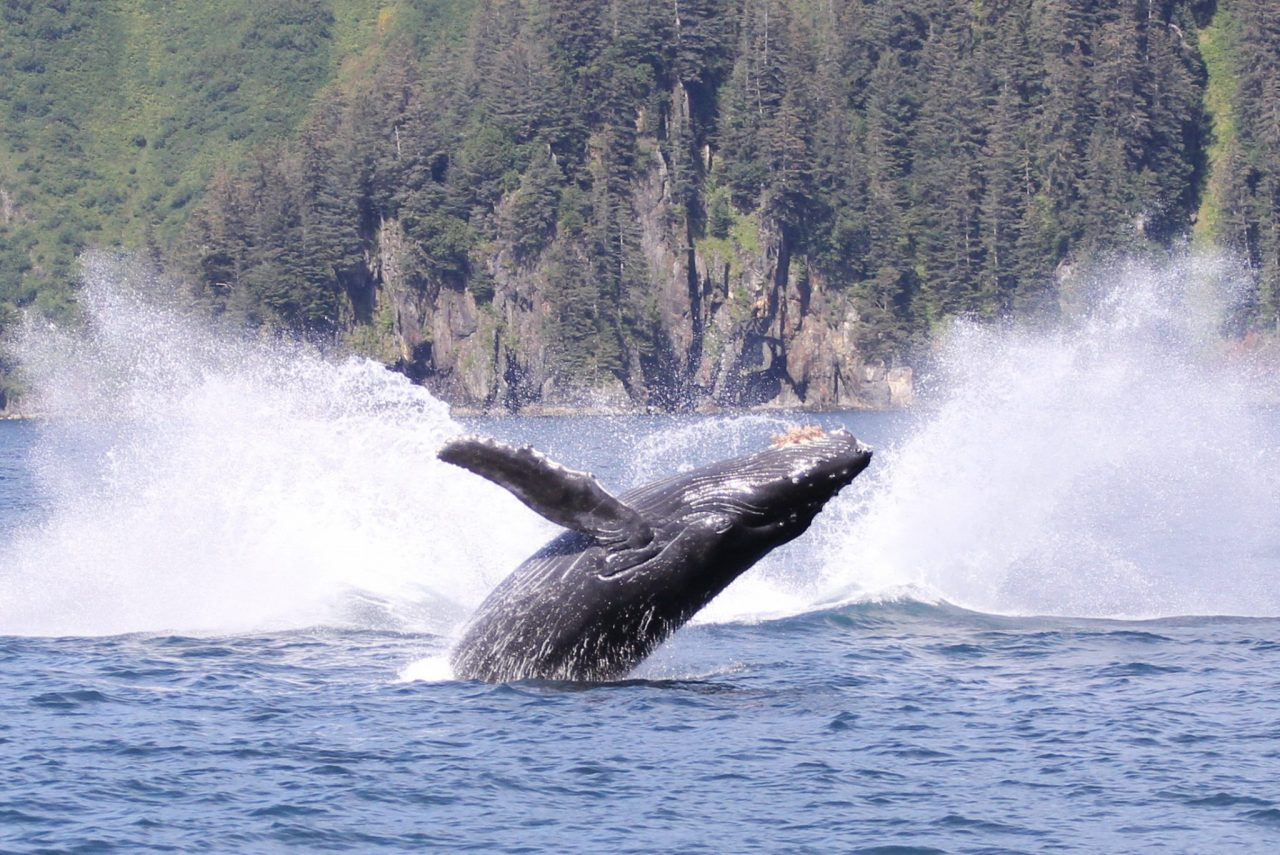 Explore the World of Whales