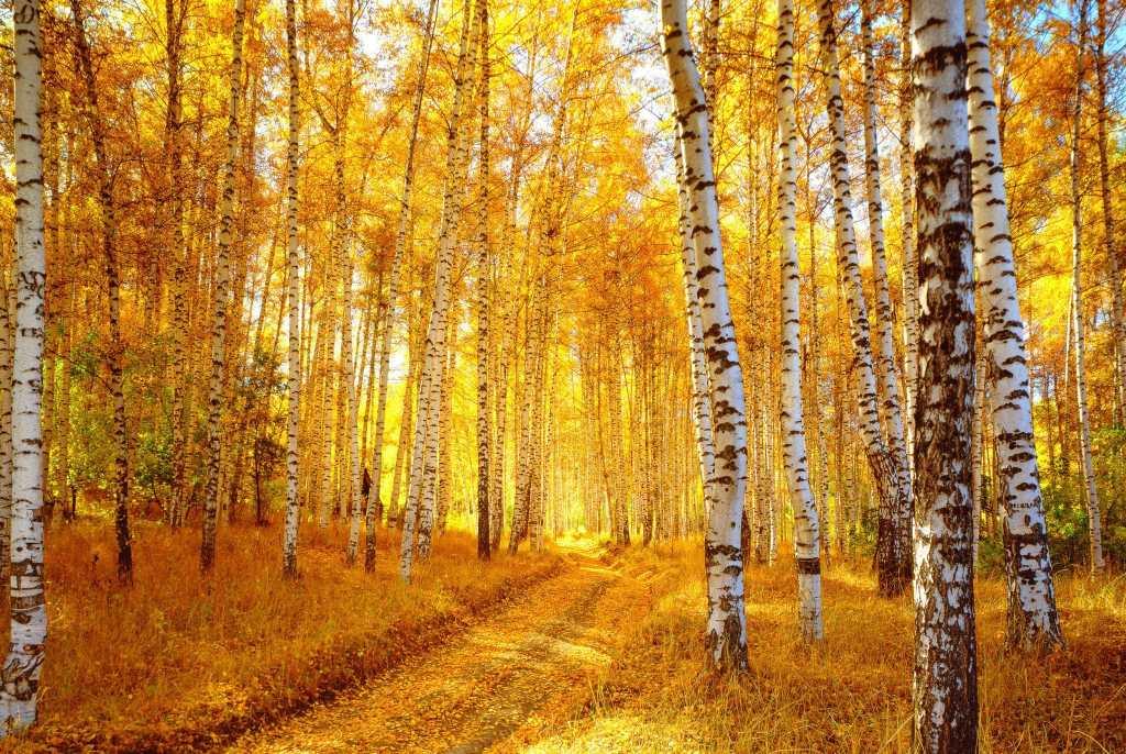 Autumn colors of Alaska Fall Foliage