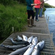Best weeks of Alaska fishing start now