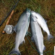 Stand for Salmon signatures not about protecting fish