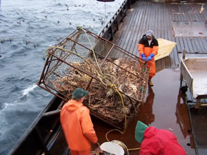 The Dark and Dirty Side of the Bering Sea Story You Wont See on the Discovery Channel