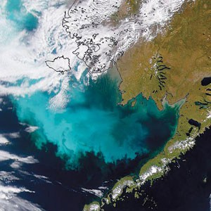 algal bloom from space