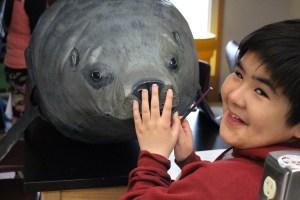 "student observes ""stranded"" life-size sea lion"