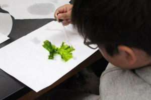 student creating art from seawater and algae