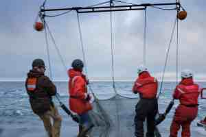 four people pulling a large net out of the ocean