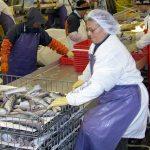 Woman processing fish