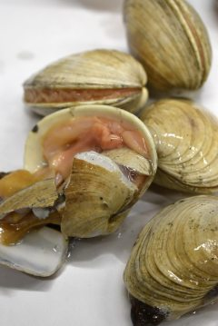 closeup of clams