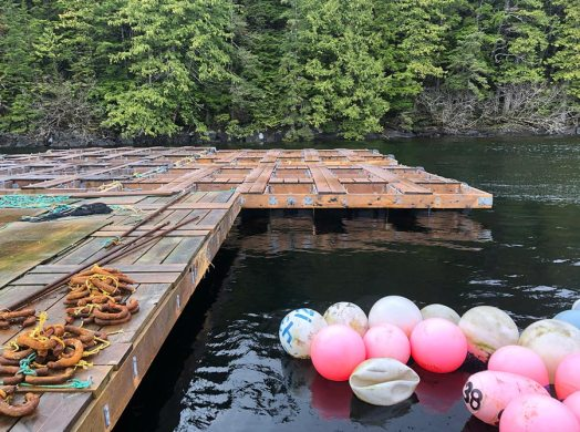 buoys and rafts for oyster farm near the shore
