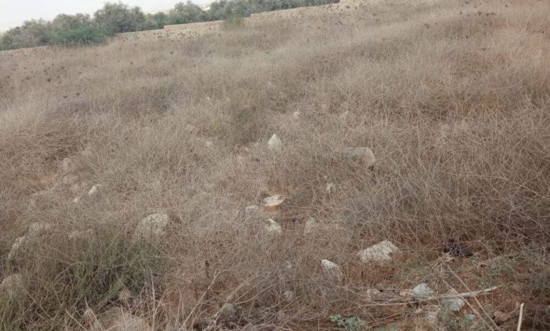 صورة صورة أرض يغطيها الشوك شرحها : قبور شهداء اليرموك في سمر الكفارات