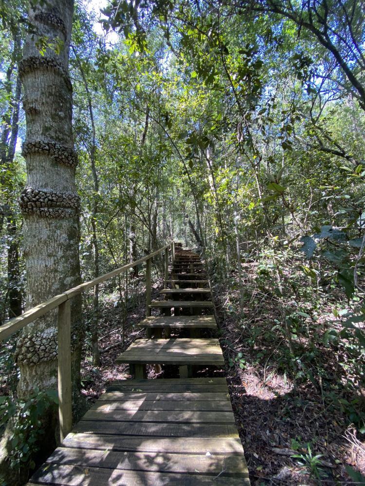 Tsitsikamma National Park (Two)