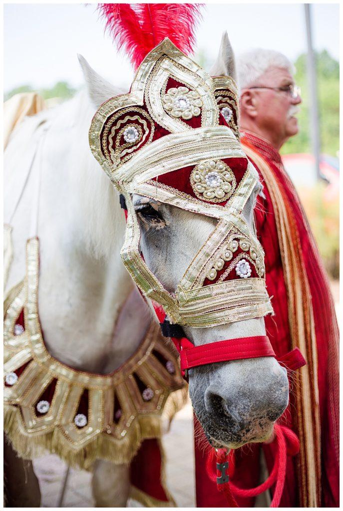 white horse for baraat