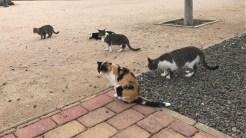 destrozos colonia felina 4