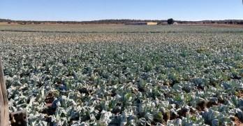 """Restricciones de agua a los regantes del Campo de Montiel: """"No será rentable producir"""""""
