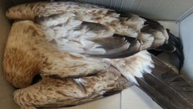 Medio Ambiente cifra en 185 las aves electrocutadas en la provincia a lo largo de este año