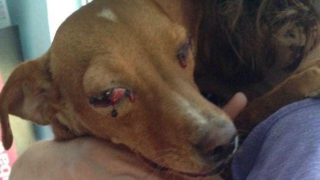Siete meses de prisión, la condena por disparar intencionadamente a un perro