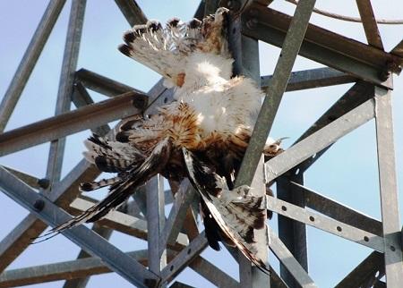 En 2018 murieron 266 aves electrocutadas en la provincia de Albacete