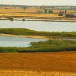 Denuncian daños a la avifauna y pérdida de valores naturales en lagunas de Albacete por la construcción de plantas solares y eólicas