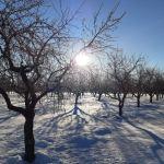 """Los expertos esperan """"gran disparidad"""" en la evolución de los cultivos de la provincia tras las nevadas y heladas"""