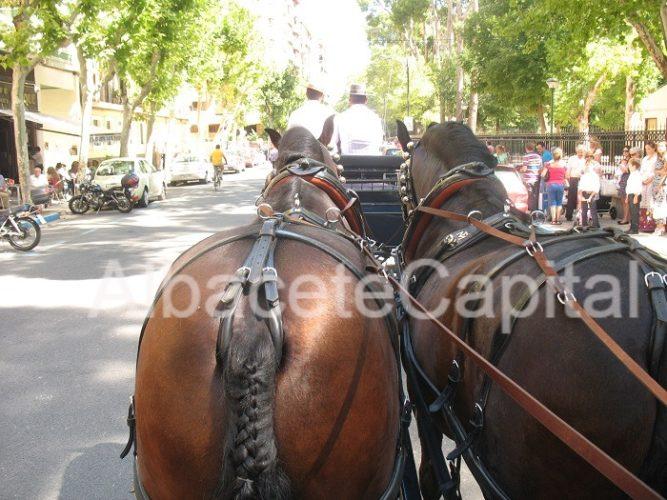 caballos albacete (11)