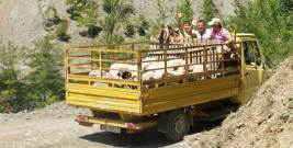 Nordalbanien: Viehtransport
