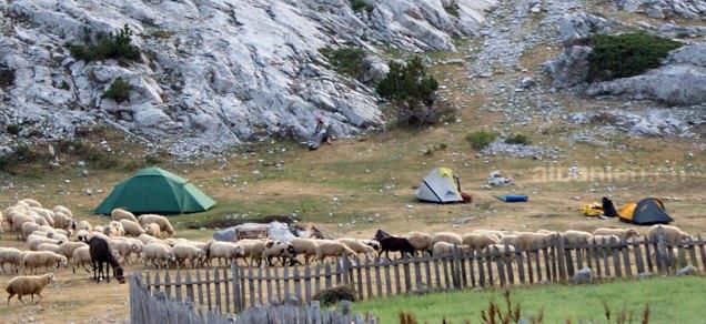 Zelte von Wanderern auf einer Alp in den Albanischen Alpen