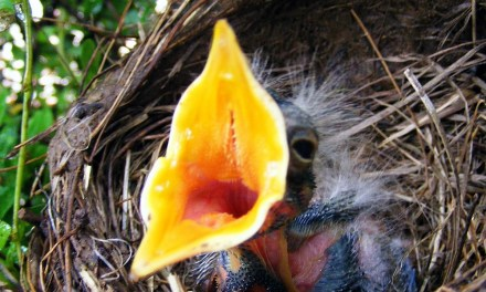 Poem A Day – Ed Rinaldi – mother bird told me to go