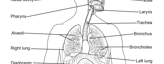 Anatomy Coloring Pages Anatomy Coloring Pages Free Coloring Pages