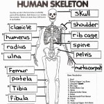 Anatomy Coloring Pages Coloring Page Free Printable Human Anatomy Coloring Pages