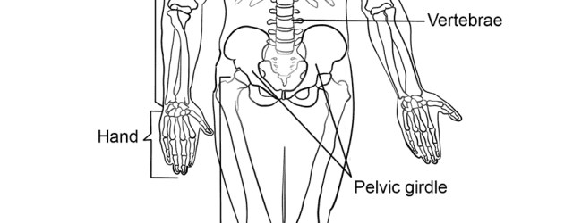 Skeleton Coloring Pages Human Skeleton Coloring Page Free Printable Coloring Pages