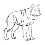 Wolf Coloring Pages For Adults Coloring Pages Free Wolf Coloring Pages Astonishing Photo